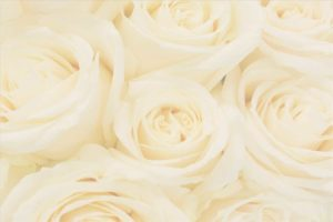 A rose green screen photo booth background
