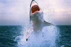 a huge shark in a green screen background